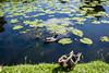 Animals in Edenbridge, England. (ost_jean) Tags: ostjean animalsinedenbridge england nikon d5200 tamron sp af 1750mm f28 xr di ii vc ld aspherical if