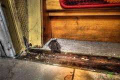 mouse (Wolf Jan) Tags: old lost verlassen abandon abandoned vertrekken decay areaurbex areaurbexjan forgotten relicts urbex urbexzone rotten rottenzone lostplace igurbex tvurbex grimenation decaynation grimelords hotel
