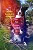 DSC_2357 (ASHA THE BORDER COLLiE) Tags: ashathstarofcountydown dog mothers day card funny pic border collie inspirational
