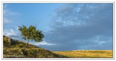 ABC_3788 (Lynne J Photography) Tags: cumbria lakedistricy kellyhalltarn sunrise nikon tarn reflection sunset lonetree lone tree waterfalls longexposure tomgillfalls