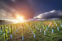 (Gergo Keseru) Tags: pentax k3 samyang 10mm pentaxians storm rain cloudporn sunset hungary csókakő