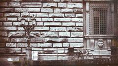La cage aux lions (Fred&rique) Tags: lumixfz1000 raw italie florence photoshop architecture lampadaire lion sculpture fenêtres barreaux vélo bicyclette