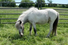 Assessment-Horse-Therapy-20170607 (10)