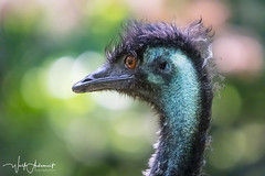 let's do punk (Wolf Ademeit) Tags: bird fun punk color feather head wolfademeit sony sigma