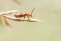 Still working (Photo.Nartschik) Tags: makrofotografie makro natur insekt nature insects insect wildlife macrophotography macro