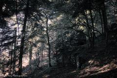 """""""Dolmen dit La Pierre à Mata"""" (Pascal Rey Photographies) Tags: mégalithes megaliths dolmen isére france merlas grandechartreuse néolithique cromlech dolmenditlapierreàmata légende magie forêt montagne"""