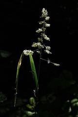 Licht (Nikonfotografie) Tags: sonnenlicht meinnorden nikonofficials nikonlove nikon kontrast lichtundschatten licht gras gräser bestofnature naturephotography nature natur