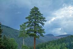 52 Weeks 2017_No. 27, Jacks Creek (Anna Gurule) Tags: pecos mountains newmexico nm nature forest santafenationalforest artedgy annagurule annaortizgurule jackscreek