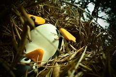 Has fallen (BarbaraBonanno BNNRRB) Tags: hasfallen tux mascotoflinux mascot linux