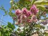 632 (en-ri) Tags: fiorellini boccioli blossoms little flowers verde rosa sony sonysti albero tree