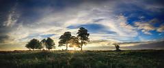 Cothelstone cloudscape (OutdoorMonkey) Tags: cothelstonehill quantocks quantockhills sevensisters tree silhouette cloud sunset sunshine sunlight sky cloudscape landscape evening somerset hilltop aonb beeches beechtrees