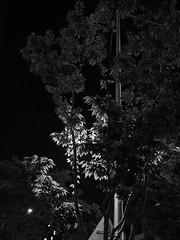 street tree_1 (METJEONG) Tags: street tree black white bw em1 streetlight night