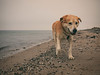 2017-02-04_16-48-37 (torstenbehrens) Tags: hund strand fehmarn olympus ep1 digital camera