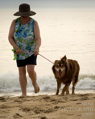 SZP_8895_pslr5 (Lakeside Annie) Tags: 2017 20170719 aussie australianshepherd bethanybeach bethanybeachde bethanybeachdelaware d7100 delaware denali july19 leannefzaras nikon nikond7100 redtri redtriaussie sarazphotography sigma sigma1770mm wednesday beachdog dog sandynose sandypaws beach delawarebeach