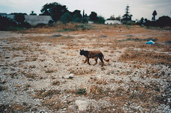 Wild cat (GrailK) Tags: contax139 cat straycat brave film analog argentique colours tunisia carthage 100iso chat sauvage abandonné wild hairy kodak 28mm