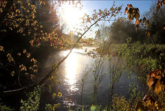 Afternoon view of the lake (kurnmit) Tags: afternoon view lake scenery nature waterstream autumnleafs fall bokeh