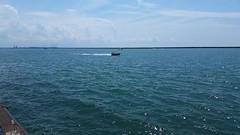 Jersey skiffs (sabresfreak) Tags: fast speed loud thunderattheouterharbor outerharbor vintage engine windmills sun blue freshwater lakeerie water boats racing jerseyskiffs