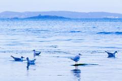 Ireland - Bray (Marcial Bernabeu) Tags: marcial bernabeu bernabéu ireland irlanda bray playa beach sea mar ocean oceano atlántico atlantico atlantic water agua blue azul birds aves pajaros pájaros