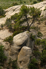 Determined (arbyreed) Tags: arbyreed rocks granite granitic cityofrocks cassiacountyidaho graniticbornhardts bigrocks boulders geology idahogeology tree pine pinionpinetrees