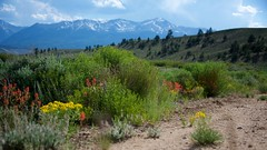 The Rugged Road (The Good Brat) Tags: colorado us westonpass mountain landscape scenic altitude wildflowers nature natural wild rugged