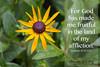 CJFruitfulInAffliction (Chronic Joy Ministry) Tags: chronicjoy scripture genesis4152 fruitful affliction
