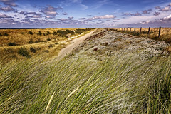 Dunes And Dike In The Late Sun (Alfred Grupstra) Tags: nature landscape sky grass scenics outdoors ruralscene blue summer cloudsky nopeople meadow beautyinnature horizon nonurbanscene field cloudscape horizonoverland marramgrass sanddune