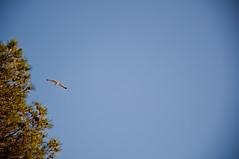 Gabbiano (Emi&Army Photographs) Tags: gabbiano emiliano toscana toskana tuscany italy uccello italia armida sole d90 flickr pineta follonica
