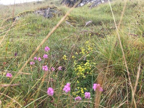 A few wild flowers