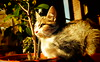Sindy 0001 (mcg0011) Tags: gata kitty mykitty gatita felino gatti manuelcarrasco