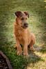 Lars (Crones) Tags: canon 6d canoneos6d canonef24105mmf4lisusm 24105mmf4lisusm 24105mm czech czechrepublic animal dog lars outdoor