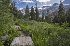 Walk of Dreams (socaltoto11) Tags: sierranevadamtrange paths paradise inyonationalforest wildflowers mountains mountainranges mountainsettings canonphotography california californialandscapes californiamountainranges california395 snowcappedmountains clouds cloudy blueskies westcoast westcoastlandscapes westcoastmountainranges walkingtrails travel pinetrees beautifulcountry bigsky