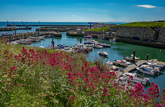 Seaham Harbour.jpg (raymondbell1953) Tags: elements seahamharbour nikon d5200 flowers red sea boats water