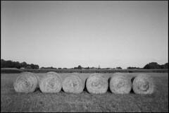 Hay stacks (Romain Massola) Tags: nature landes foin hay haystack balledefoin champ fieldcampagne country countryside leica m6 canon 50mm canon50mmf14ltm ilford hp5 bw nb blackandwhite noiretblanc bwfp epson v700 epsonv700 rodinal
