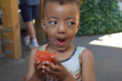 DSC_6638 London Dalston Eastern Curve Garden with Joel from South Africa Eating Vine Ripe Tomato (photographer695) Tags: london dalston eastern curve garden joel zinhle from south africa eating vine ripe tomato