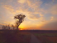 MY WAY ON A SUNNY DAY P7098351 (hans 1960) Tags: outdoor nature natur sun sunrise sonne sol soleil himmel sky farben colours trees way weg home heimat felder fields landschaft landscape