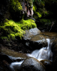 Tiny Cascade (Diane Sandoval ~ The Forest's Edge Photography) Tags: cascade waterfall falls moss guanella pass scenic byway colorado enchanted forest