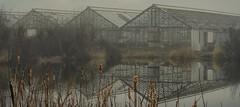 A Closer Look (Paul B0udreau) Tags: nikon paulboudreauphotography niagara d5100 nikond5100 nikkor1855mm fog rural mist greenhouse pond water canada ontario raw photoshop