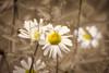 Beautiful flowers .. (Julie Greg) Tags: flowers nature park graden