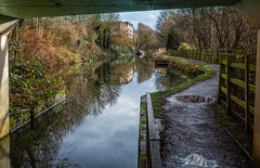 Chesterfield Canal at Tapton (Rons Images) Tags: canal chesterfieldcanal bridge reflection winter puddle towpath derbyshire rontoothill canoneos5dmkiii canonef1635mmf28liiusm