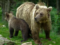 Family (kud4ipad) Tags: 2017 ukraine zakarpattia animals bear