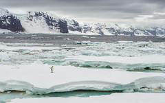 Emperor Penguin (Petrolhead2011) Tags: antarctica emperor penguin iceberg snow mountain