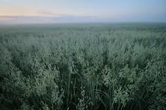 IMG_1757 (izagajewska) Tags: świtak komorów 2017 łąka motyle rowerem 340 mgła wschod wschodslonca zalew w komorowie zalewwkomorowie switaczekkomorowski niemaspania