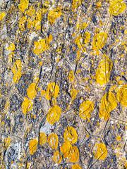 Takes A Lichen (jaxxon) Tags: 2017 d610 nikond610 jaxxon jacksoncarson nikon nikkor lens nikon50mmf28g nikkor50mmf28g 50mmf28 50mm niftyfiftyprime fixed pro abstract abstraction lichen wall weathered stone old stonewall