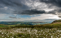 Cotton Grass under Dark Skies (Peter Quinn1) Tags: cottongrass higgertor hathersage derbyshire clouds glowering darkclouds