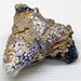 Silicified-fluoritized solitary rugose coral (Mississippian; near Cave-in-Rock, Illinois, USA)