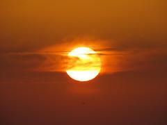 IMG_0078x (gzammarchi) Tags: italia paesaggio natura mare ravenna lidodidante alba sole nuvola animale uccello volo monocrome