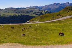 Pas de la Casa (Andorra) (Carlos A. Castro 72) Tags: nikon 1635mm d750 andorra landscape mountains cows vacas caballos horses motos bikes carretera road pasdelacasa