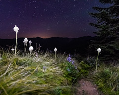 Follow your own path. (Brendinni) Tags: lightpainting stars beargrass grass path night nightphotography longexposure trees green purple white evergreen ridges mountains sky nightsky adventure