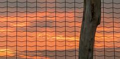 Wire (Jorden Esser) Tags: a4motorway fence fencefriday gauze hff sunset wiremesh fencepost pole sundown