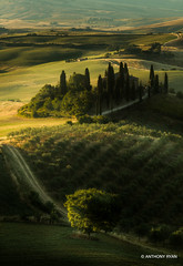 Tuscany (aryanphotography) Tags: illuminate anthonyrryan anthony sunrise anthonyryan warmth italy sfumato light ryan cypresstree trees tuscany road nature morning farmland scenic valdorcia outdoors farm sanquiricodorcia landscape siena valley